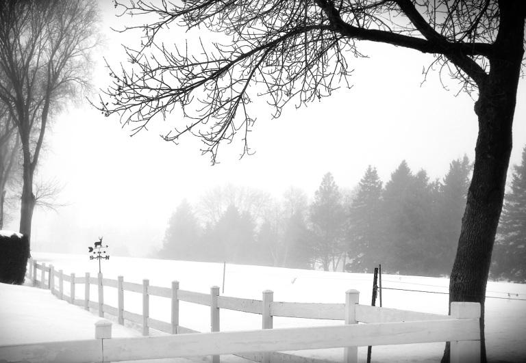 fog-alexandria