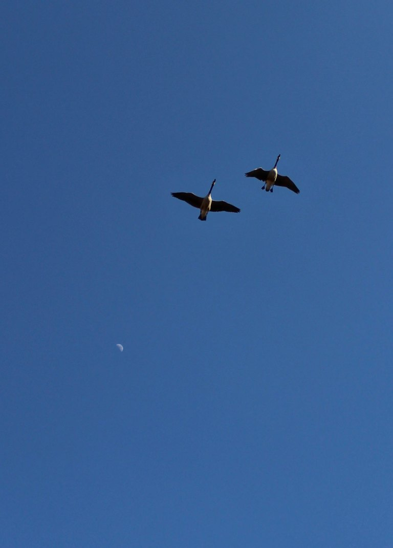 walk-5-birds